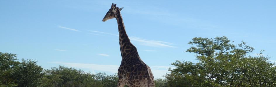 Namib2013