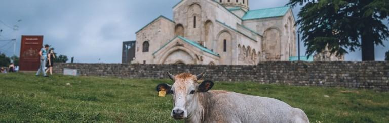 gruzie-krava-kostel
